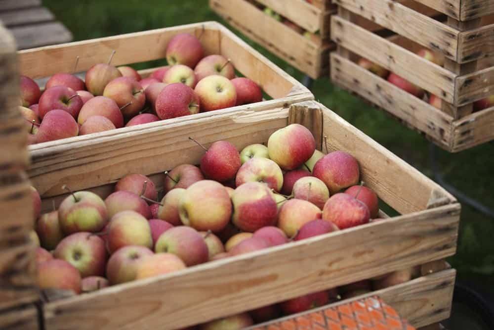 Äpfel lagern