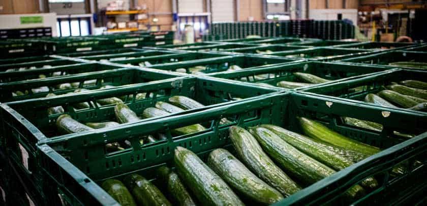 Gurken Lagerung in grünen Kisten